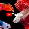 【2020年版】YouTubeに通常よりも「高画質」で動画をアップロードする方法 – モ